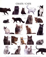 Cats Fine-Art Print