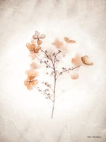 Dried Flowers Fine-Art Print