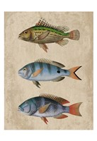 Fish Friends 1 Fine-Art Print