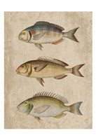 Fish Friends 2 Fine-Art Print