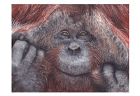 Orangutan 2 Fine-Art Print