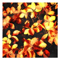 Bunch Of Leaves Fine-Art Print
