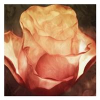 Fire Flower Fine-Art Print