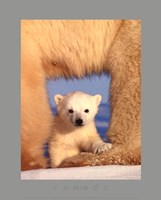 Polar Bear Cub Fine-Art Print
