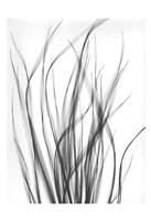 Grass 2 Fine-Art Print