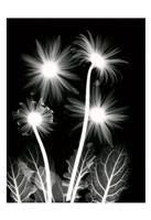 Shinning Florals Fine-Art Print