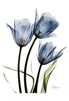 Indigo Infused Tulips Fine-Art Print