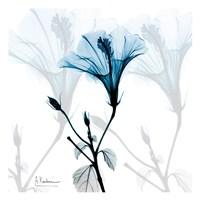 Hibiscus Azure Fine-Art Print