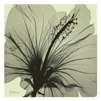 Emerald Hibiscus Fine-Art Print