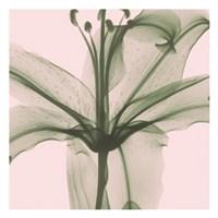 Entranced Lily Fine-Art Print