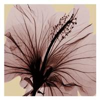 Spring Hibiscus Fine-Art Print