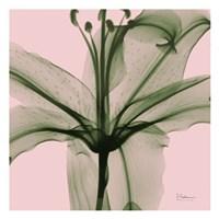 Lovers Lily Fine-Art Print