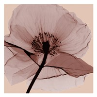 Poppy Love Fine-Art Print