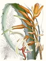 Tropical Variety III Fine-Art Print
