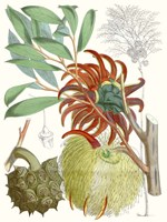 Tropical Variety IV Fine-Art Print