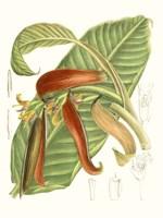 Tropical Variety VIII Fine-Art Print