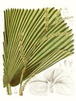 Palm Melange I Fine-Art Print