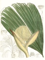 Palm Melange II Fine-Art Print