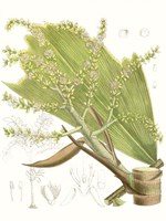Palm Melange III Fine-Art Print
