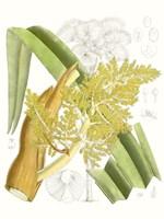 Palm Melange V Fine-Art Print