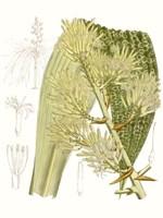 Palm Melange VI Fine-Art Print