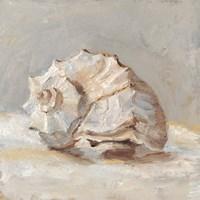 Impressionist Shell Study II Fine-Art Print