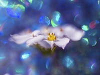 Jewels of the Enchanted Forest VI Fine-Art Print