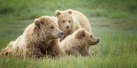 Bear Life IX Fine-Art Print