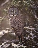 Owl in the Snow I Fine-Art Print