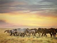Sunkissed Horses I Fine-Art Print