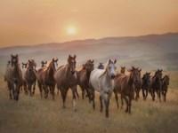 Sunkissed Horses II Fine-Art Print