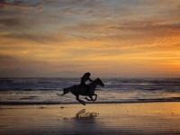 Sunkissed Horses IV Fine-Art Print