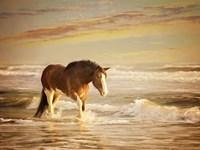 Sunkissed Horses V Fine-Art Print