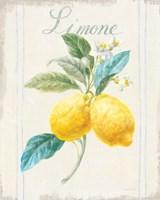 Floursack Lemon III v2 Fine-Art Print