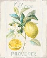Floursack Lemon IV Fine-Art Print