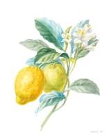 Floursack Lemon II on White Fine-Art Print
