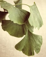 Gingko Color Fine-Art Print