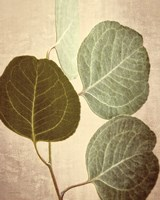 Eucalyptus Color Fine-Art Print