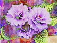 Primula Lilac Fantasy Fine-Art Print
