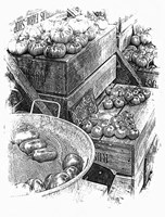 Rustic Display Of Tomatoes For Sale Black And White Fine-Art Print