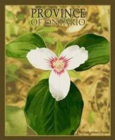 Province Ontario Fine-Art Print