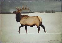 Silver Mist Elk Fine-Art Print