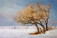 Fox And Winter Oak Fine-Art Print