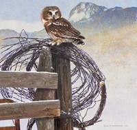 Saw-Whet Owl Rusty Fence Fine-Art Print