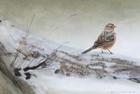 Snowscape Wc Sparrow Fine-Art Print