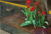 Sparrow,Tulips And Sidewalk Fine-Art Print