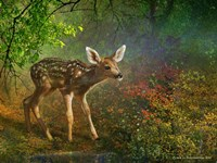 Forest Fawn Fine-Art Print