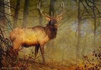 Aspen Forest Bull Elk Fine-Art Print