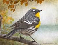 Wetland Warbler Fine-Art Print