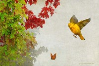Butterfly And Warbler Fine-Art Print